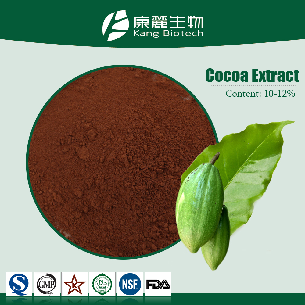 Bulk Cocoa Beans Extract for Sale,Cocoa Beans Extract