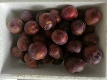 new crops high quality fresh black plum for sale