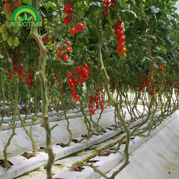 Commercial Coco Coir Substrate Cuture For Fruit Vegetable