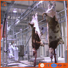 Kosher Buffalo Slaughter House With OX Meat Abattoir Procedure