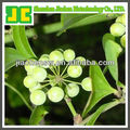 Herb Plant Extract Smilax China L. Extract