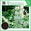 Golden suppliers provide black cohosh powder extract black cohosh triterpenoid saponis powder 2.5% 5% 8%