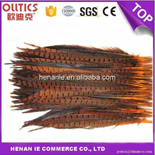 Hot sale pheasant feather belched and dyed tail for decorative