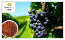 Grape Seed Extract Proanthocyanidins and polyphenols