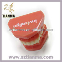 Acrylic resin denture teeth model items for school teaching