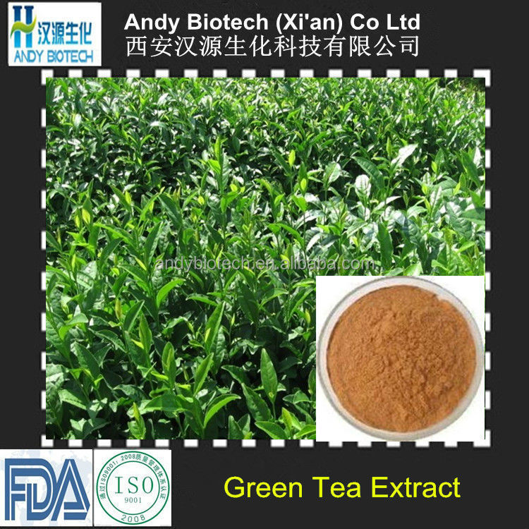 Best Selling Plant Extract Polyphenols 98% EGCG 60% best green tea extract