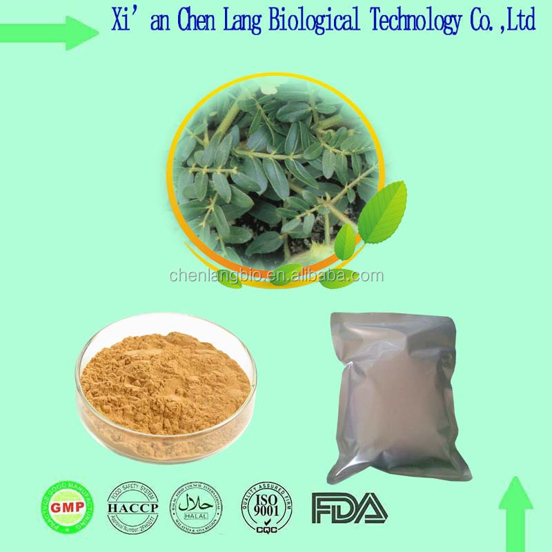 Test UV High Quality Tribulus Terrestris Saponins Tribulus Extract Powder