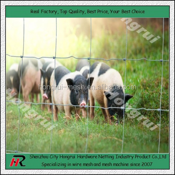 (100%Direct Factory)Hog Wire mesh Fencing