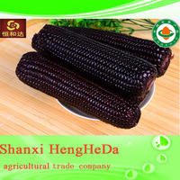 factory directly creative yellow corn specifications
