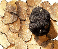 Chinese Black Truffle price