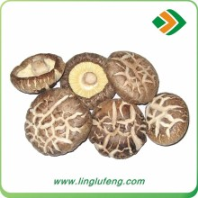 2016 new crop Grade A Dry Shiitake Mushrooms with top quality