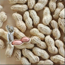 Price of Peanut Raw in Shell/Kernels/Blanched Peanuts