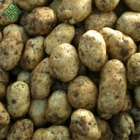 Bangladesh Fresh Vegetable Potato/ Chines Potato/ fresh Potato