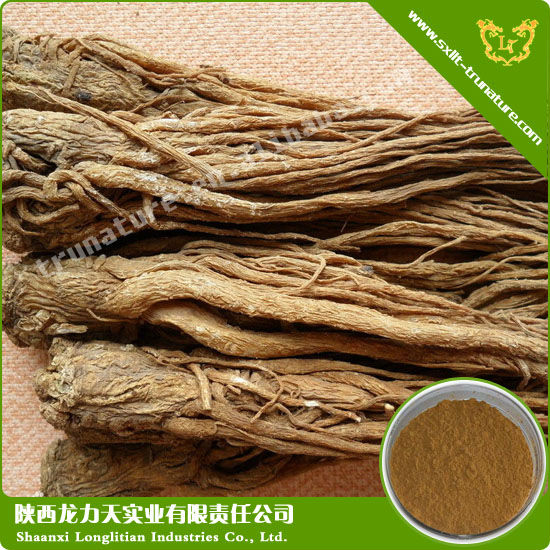High Quality Angelica Extract- Dang Gui(Chinese)