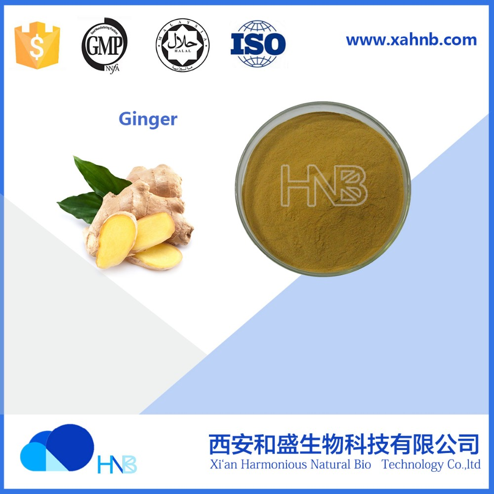 100% pure natural Ginger extract Zingiber officinale extract 5% gingerols with low price