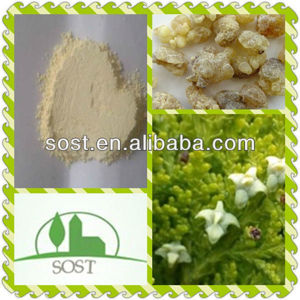 100Percent Natural And Hot Sale Boswellia Extract