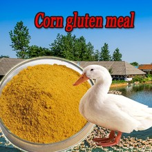 animal feed plant protein 60% corn gluten meal powder