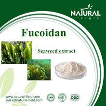 Laminaria Japonica extract sample can be offered seaweed extract CAS NO.:9072-19-9