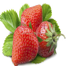 cao mei zhong zi hot sale Strawberry Seeds For Planting Strawberries From Seeds
