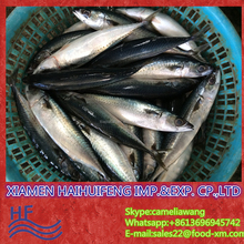 Sell frozen product mackerel fish to indian