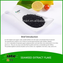 Wholesale dried seaweed extract fertilizer