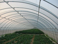 Anti drip UV protection Multi span PE Cover Film, PE greemhouse film for vegetable greenhouse