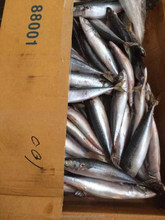 China Suppliers of frozen mackerel