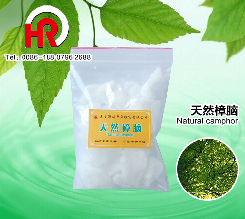MIN 99% natural camphor for health care products