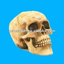 Realistic human resin animal skull craft