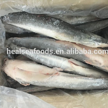 fishing wholesale frozen gutted catfish