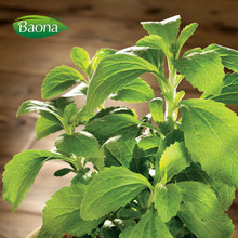 stevia dry leaves extract fine powder in bulk stevioside reb a b c for food additives