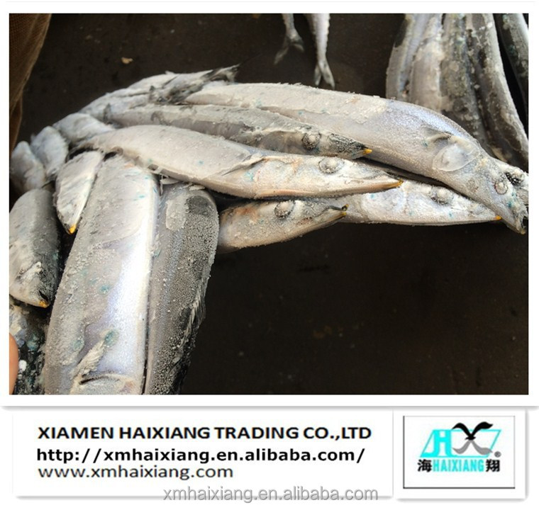 High Quality Fresh Frozen Pacific Saury