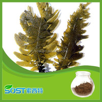 Factory supply kelp extract seaweed extract powder wakame extract 10%20%30%50% brown algae fucoxanthin