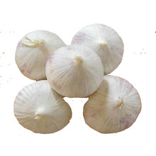 China farm fresh solo garlic