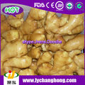 high quality washed fresh ginger/ air dried ginger export /air dried ginger whole