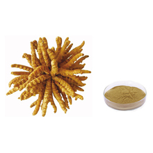 ISO Certificated 100% Natural Cordyceps Extract Powder,Cordyceps sinensis mycelia extract powder