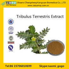 GMP Manufacturer Supply Natural Tribulus Terrestris Extract Powder 60 Saponins