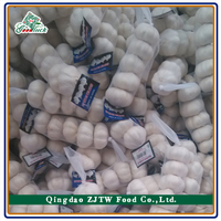 Fresh Garlic Price Best Quality Garlic