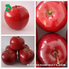 new crop fresh red delicous sweet crispy minerals Tianshui huaniu apple