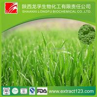 High Quality organic wheatgrass powder