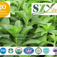 Stevia Extract Powder Form RA Series