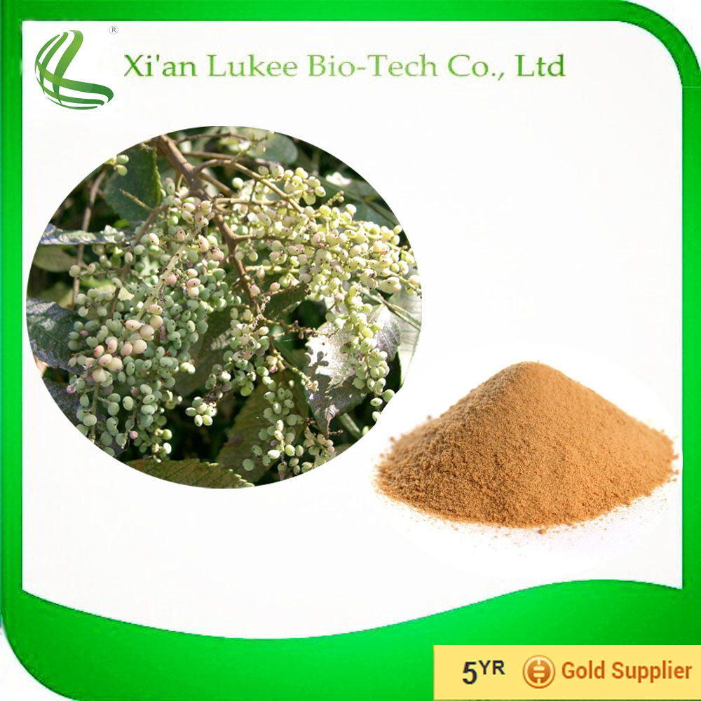 High Quality galla chinensis extract 98% tannin