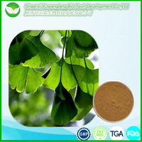 High quality pharmaceutical natural herb Ginkgo biloba leaf extract powder