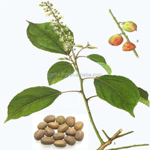 Manufacture supply pure natural Croton extract