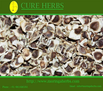 Moringa seeds prices