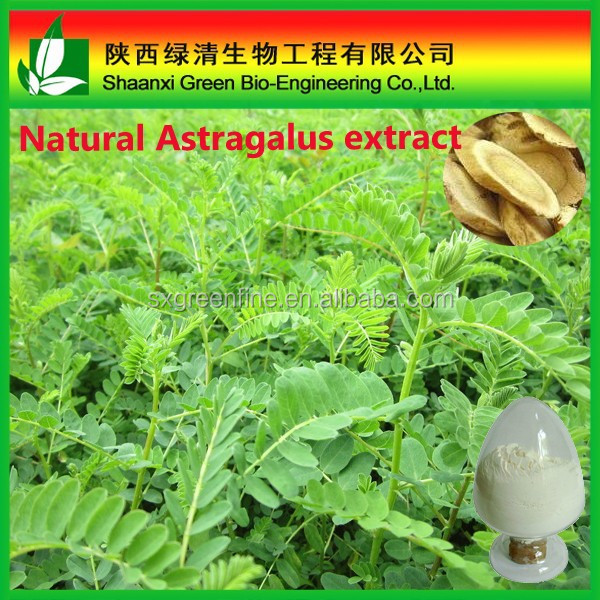 100% Natural Herb Astragalus root extract/Astragalus membranaceus extract with Immunity Enhancement
