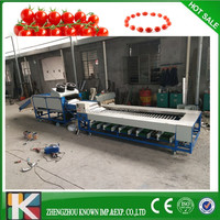 blueberry type fruit sorting machine/fruit grading machine Cherry Tomato washing and cleaning waxing and grading sorting