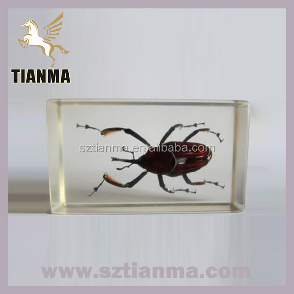 Clear Acrylic Real Insect Specimen Paperweight