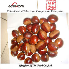 New Season Good Price Dried chestnuts