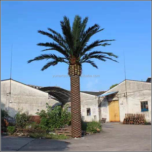 landscape outdoor artificial canary date tree palm tree